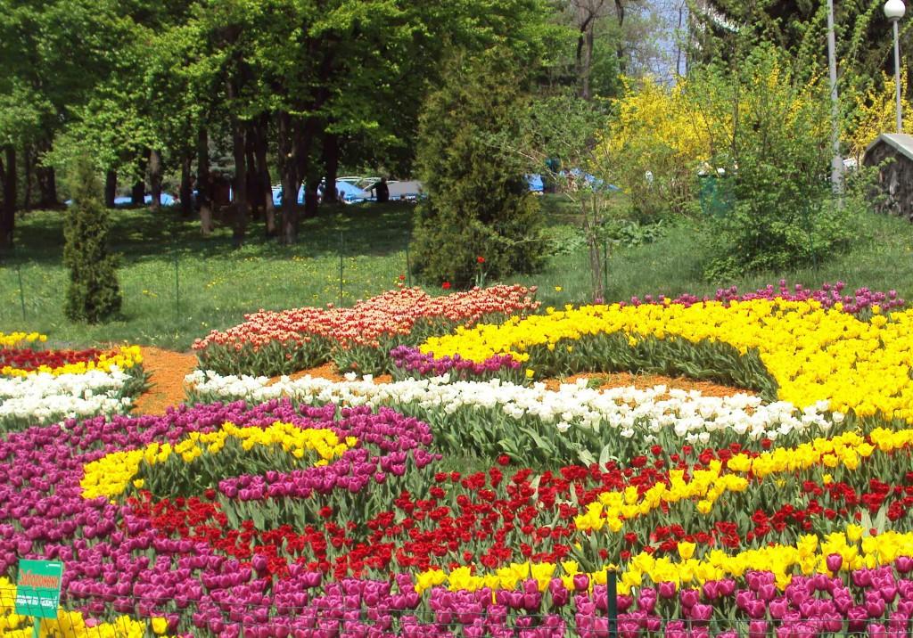 выставка тюльпанов в киеве 2013