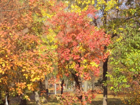 красная листва