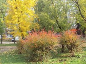 Последние краски осени