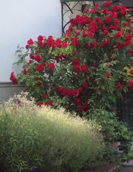 2 цветы 2