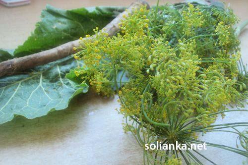 укроп и зелень для засолки