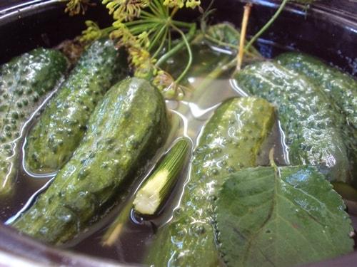 самые вкусный малосольные огурцы рецепт быстрого приготовления в кастрюле